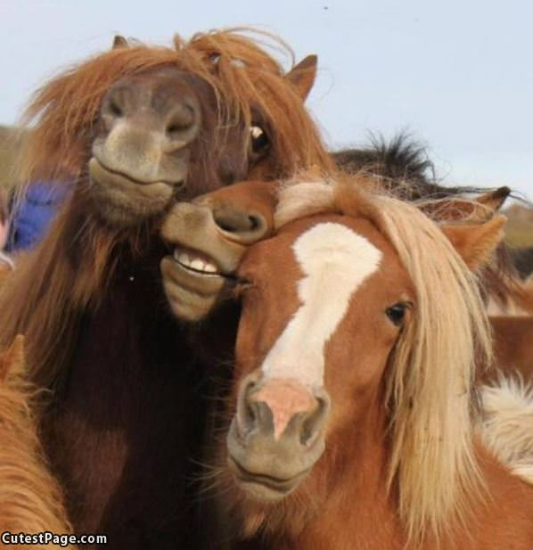 3 Smiling Horses