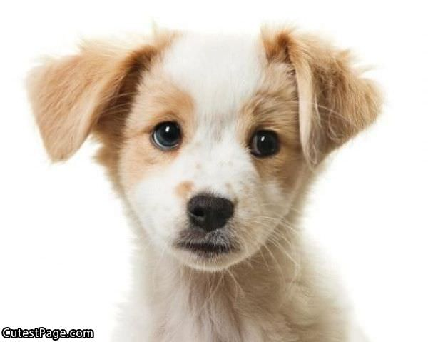 a cute puppy face all cute pictures