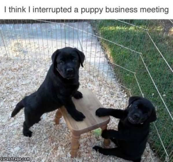 An Important Meeting