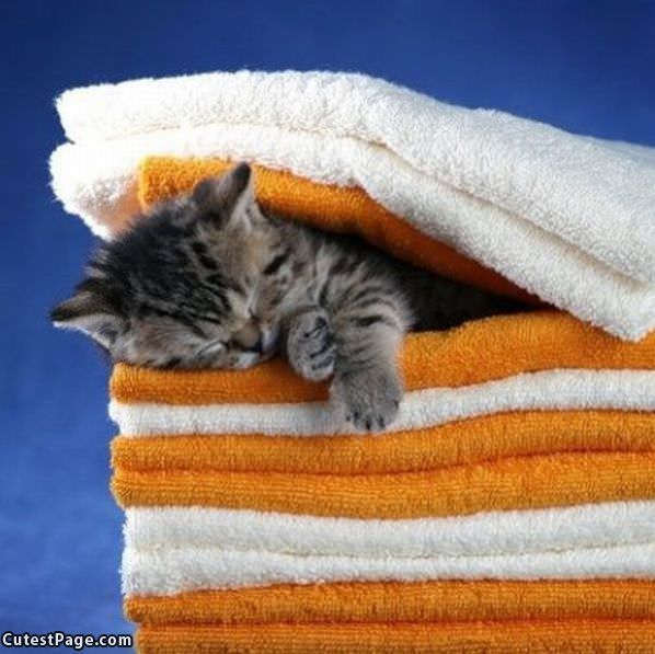 Asleep In The Towels