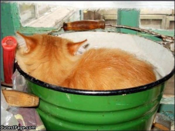 Bowl Of Cat