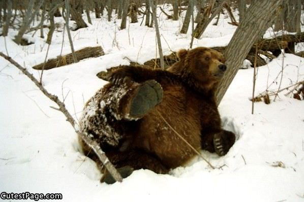 Cute Bear Fell