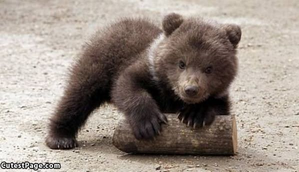Cute Bear Log