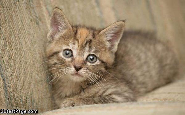 Gattilicious  =^.^= - Pagina 3 Cute_Cat_Face_Here