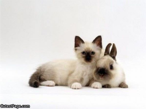 Cute Kitten And Bunny