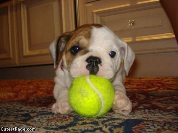 Cute Little Puppy And Ball