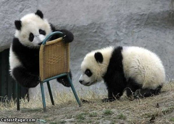Cute Panda Chair