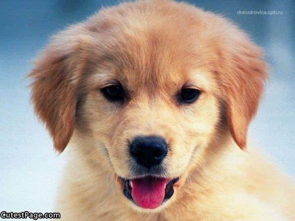 Cute puppy smile
