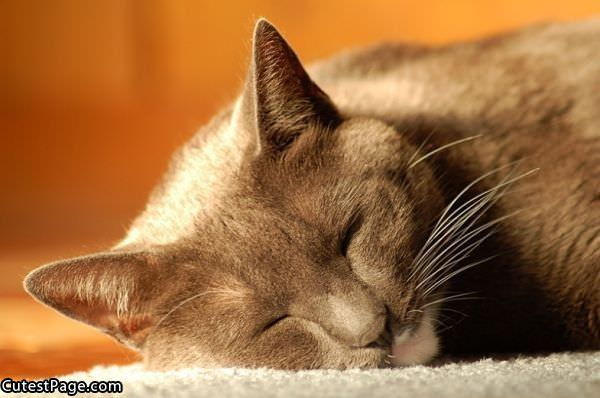 Cute Tired Cat | All Cute Pictures
