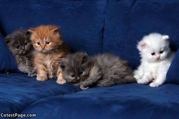 Cutest Kittens Couch
