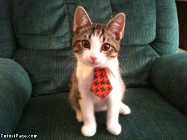 Do You Like My Tie
