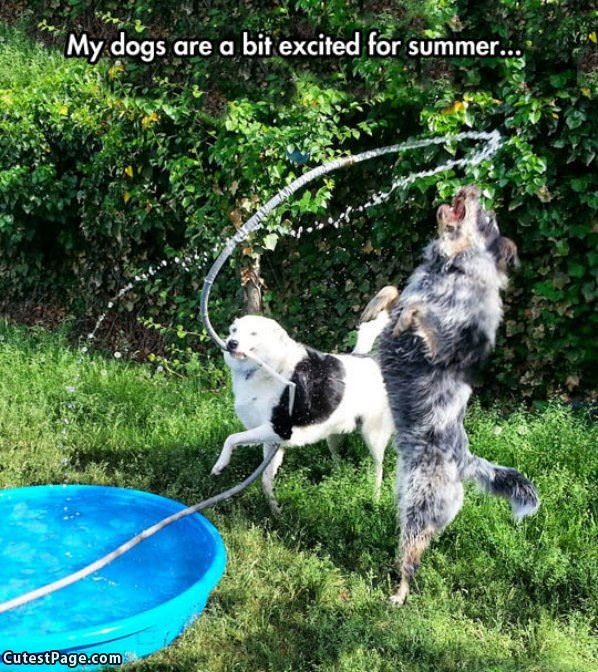 Dogs That Love Summer