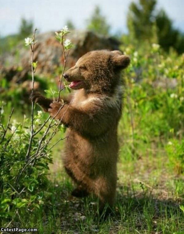 Happy Cute Bear
