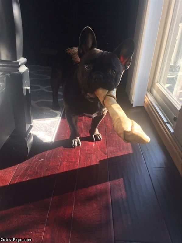 I Fetched The Bone