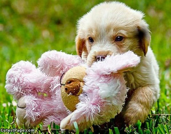 I Has A Teddy