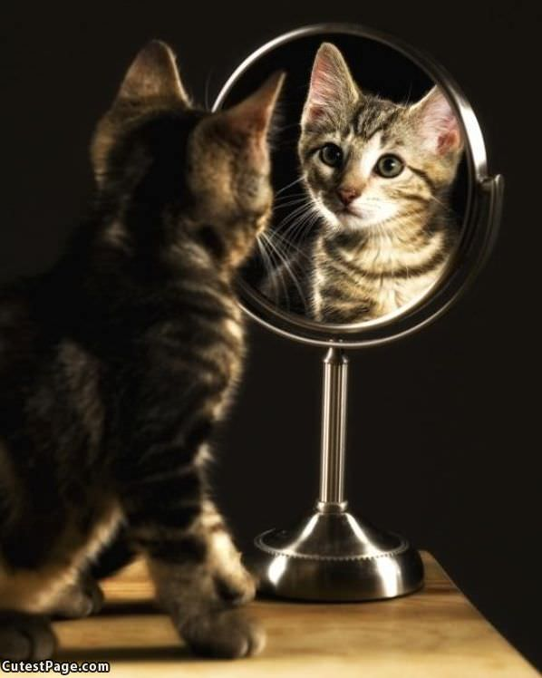 mirror mirror cat all cute pictures