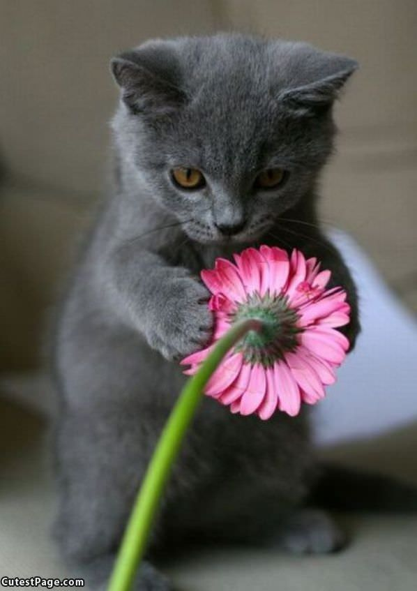 Nice Flower Dont Stop Yet Check Out Another Cute Picture