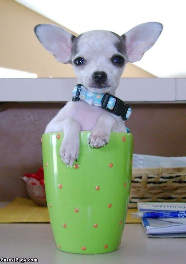One Cup Of Puppy