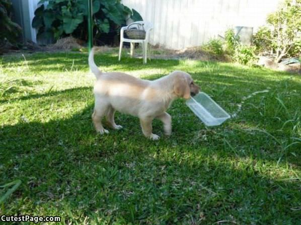 Puppy Fetching Some Water