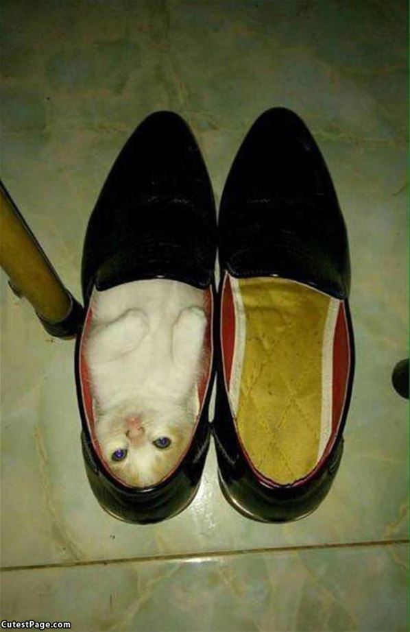 Shoe Kitty