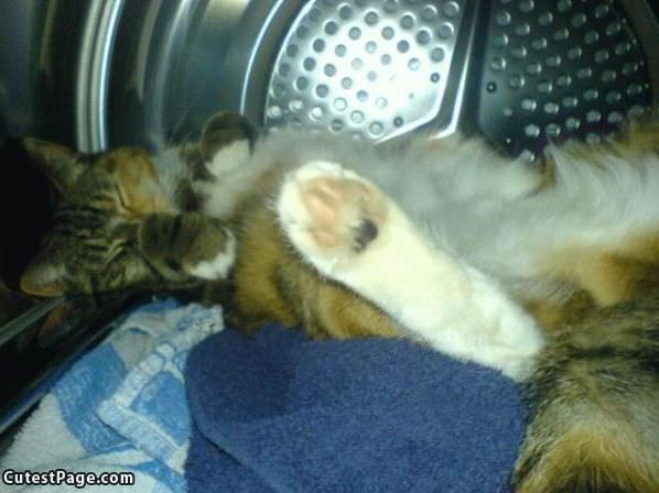 Sleeping In The Dryer