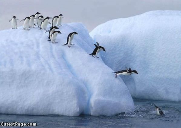 Splish Splash Diving Penguins