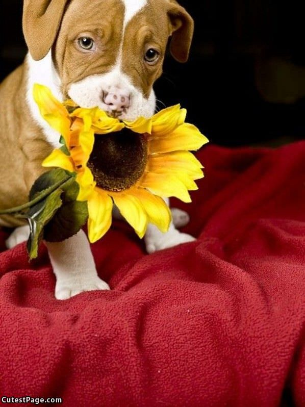 sunflower all cute pictures