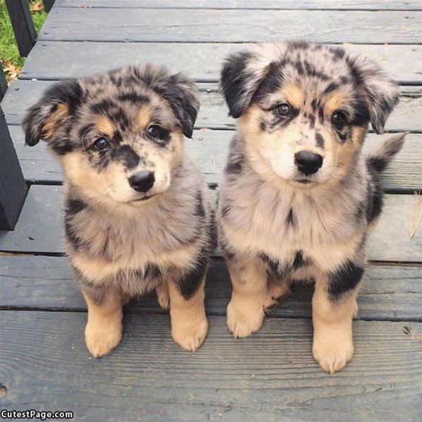 These Cute Puppies