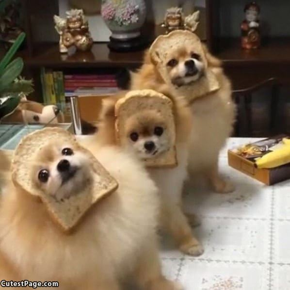 We Are All Bread