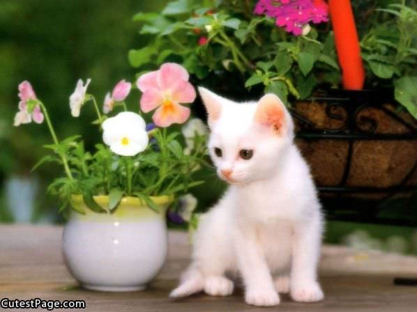 white cute kitten with flowers  all cute pictures, Beautiful flower